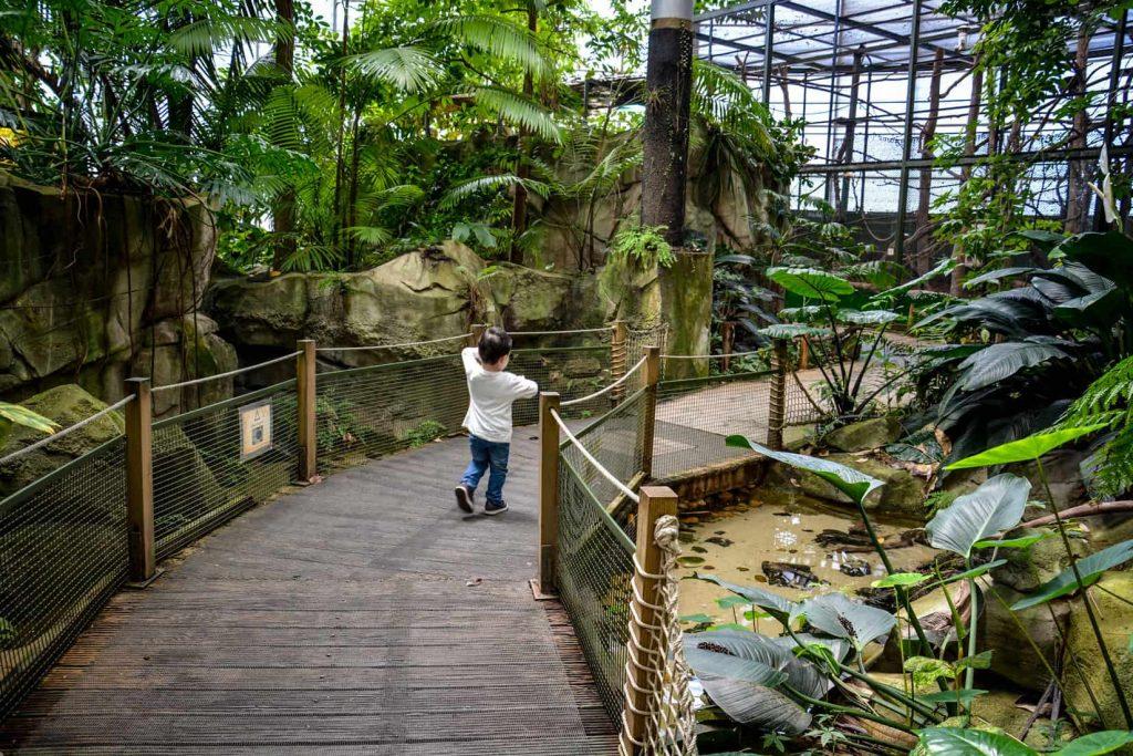 la serre amazonienne avec ses plantes et animaux exotiques